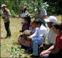 image_mapuche tesi